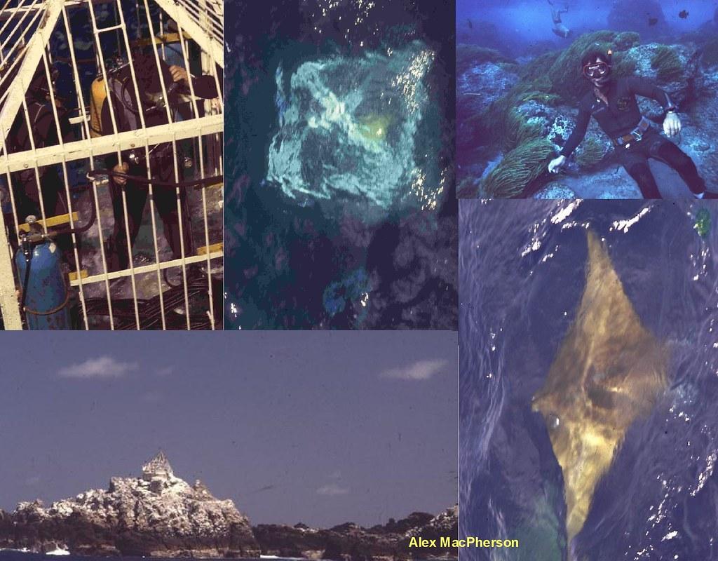 Penedos collage