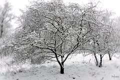 Black and White (HdB1973) Tags: winter white snow tree netherlands zeiss sony sneeuw boom carl alpha mondriaan nld stichtingbrabantslandschap moergestel sal1680z variosonnar16803545za a580 minoltaamount provincienoordbrabant geosetter garminetrexlegendhcx landgoedterbraakloop variosonnartdt35451680 variosonnartdt3545180