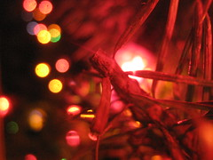 christmas lights (freedomrockslimeball) Tags: tree lights cool bokeh christmastree 2010 christmastreelights