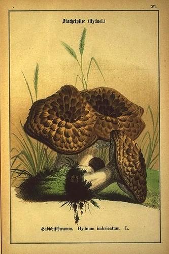 007-Allgemein verbreitete eßbare und schädliche Pilze 1876- Wilhelm von Ahles
