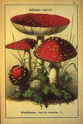 008-Allgemein verbreitete eßbare und schädliche Pilze 1876- Wilhelm von Ahles