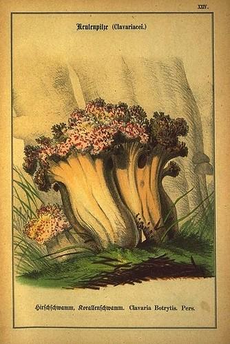 018-Allgemein verbreitete eßbare und schädliche Pilze 1876- Wilhelm von Ahles