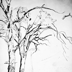 Mad Skills (Thomas Hawk) Tags: california bw usa tree painting unitedstates unitedstatesofamerica stanford paloalto southbay richards darmstadt stanforduniversity cantorartscenter williamtrostrichards natureshand studyoftrees