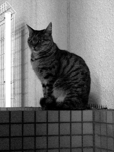 Today's Cat@2010-12-23