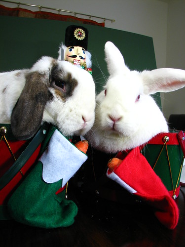 bunnies hate christmas card photos