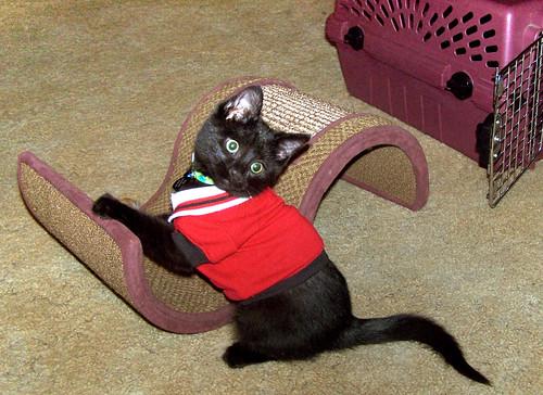 XIII as a kitten