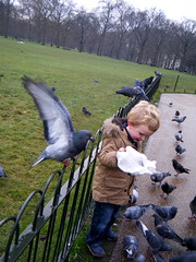 feeding the pigeons in Green Park