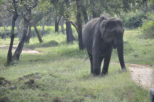 Wild elephants @ Masinagudi