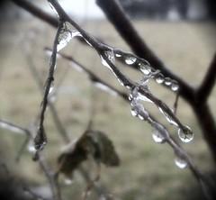 reaching ice