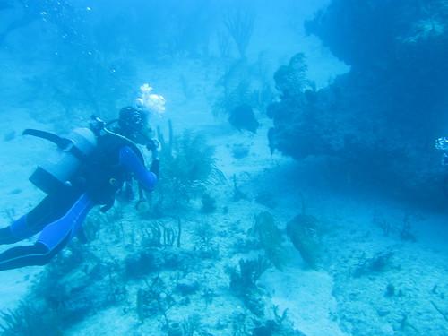 Cuba Arrecifes de coral