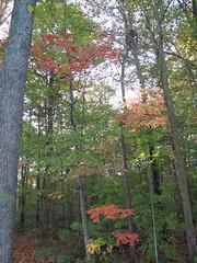 fall in the midwest (birchloki) Tags: trees light ohio tree nature forest botany forests edon edonohio