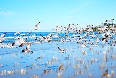 gulls ((CMC)) Tags: california beach reflections 50mm nikon gulls orangecounty nikkor oc picnik saltcreekbeach