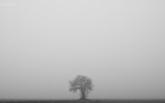 One (Jpspider.jpg) Tags: winter white mist black macro tree ex portugal branco fog canon landscape eos one sigma paisagem preto ribeiro cinza joao 1850 nevoeiro 40d ilustrarportugal jpspider portugalmagico