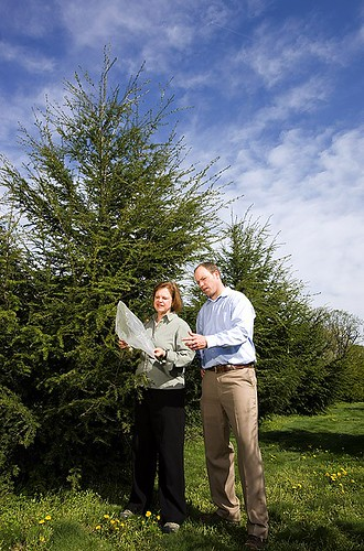 USDA scientists Susan Bentz and Richard Olsen examine bagged branches of hybrid hemlocks inoculated with hemlock woolly adelgid as part of field tests of the hybrids' tolerance to the Asian pest.