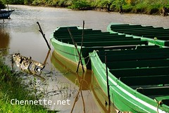 The Green Tour Boats