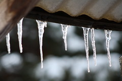 Ice sickles (orignl4mula) Tags: winter snow cold ice frozen freezing drip chilly drips icesickles