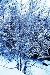 snow... (MarkScott2011) Tags: its march pretty it ill till be wait but 365 sure now omg sick so of
