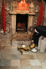 An Offering At The Rat Temple
