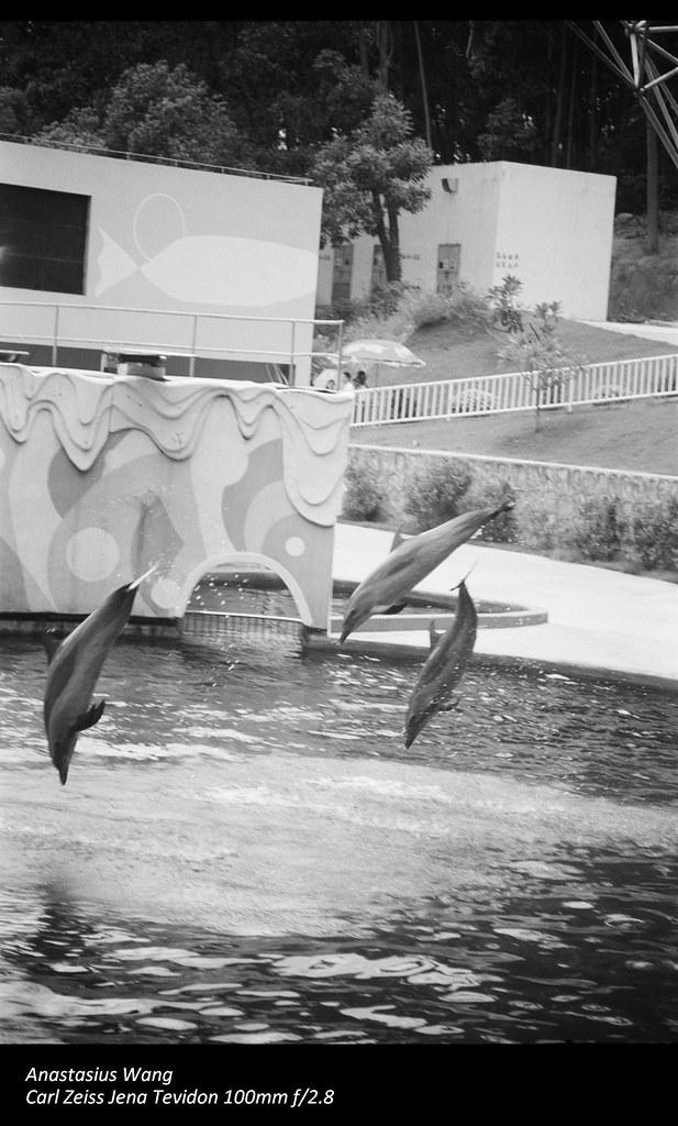 SZ Zoo 04