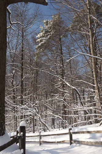 The Forest in Snow