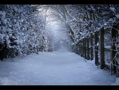 Another winter path. (Ianmoran1970) Tags: canon ianmoran ianmoran1970