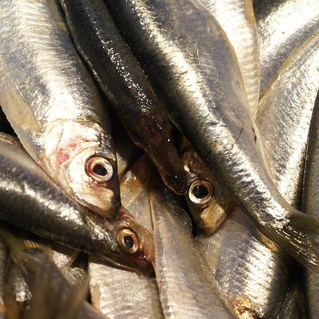 Fishmarket macro