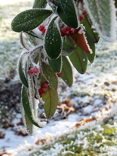 The Beauty of Frost