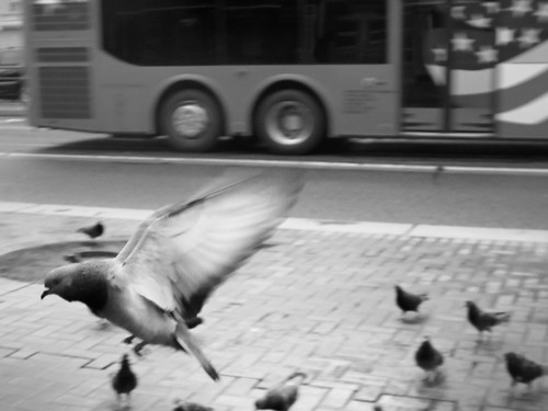 Spontaneous Flight of the Pigeon