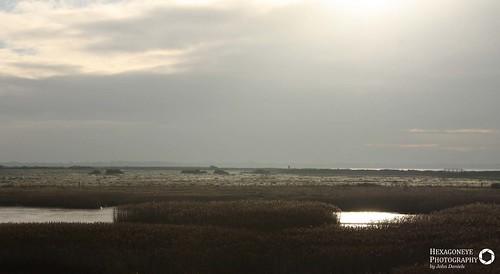 Farlington Marsh