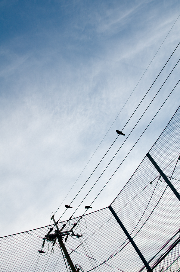 鴉|京都十条