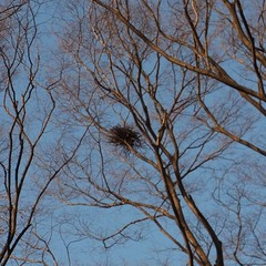 鳥の巣発見!o(^▽^)o