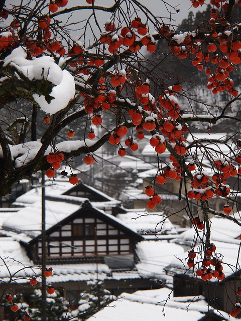 Persimmon and snow scene