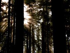 [フリー画像] 自然・風景, 森林, 日光・太陽光線, 201101270700