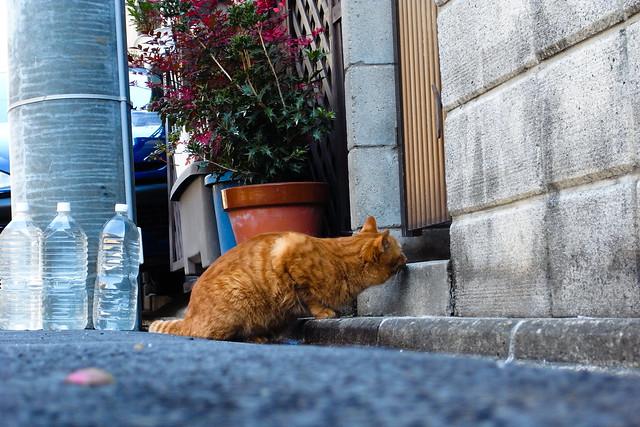 Today's Cat@2011-01-23