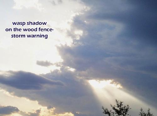 waspshadow