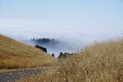 Mount Tamalpais: Rock Spring to Stinson Beach Hike (1) (Planet Q) Tags: mttam marinheadlands