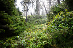16 Interno del bosco (Ciak88) Tags: tofino nikon d5300