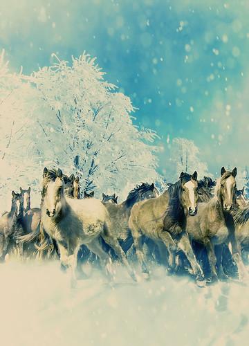 PW Snow Storm