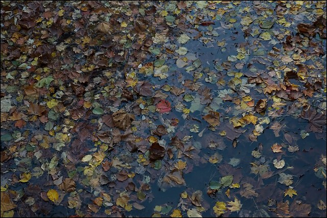 _MG_4540_biltmore_pond_leaves_res_sig1