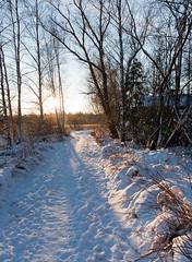 _MG_6267w1 (Antti Tassberg) Tags: winter sunset snow ice espoo suomi finland europe eu scandinavia lumi talvi pathway wintry polku talvinen jrvenper