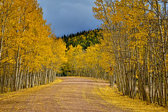 Next 16 Miles:  An Ideal Sunday Drive (Fort Photo) Tags: road autumn mountains fall nature forest landscape rockies vanishingpoint nikon colorado path dirt co aspen pathway teller 2010 goldcamp exposureblending d700 laaves