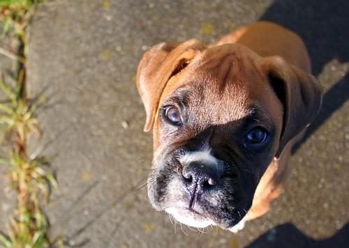 Sancho-pup