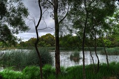 Laratinga Wetlands at Mt Barker SA (rustic cat - Sarah) Tags: trees water grass reeds wetlands laratinga