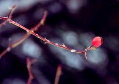 Ultimos vestigios (Isaac Torrontera) Tags: winter cloud mountain snow plant flower color colour verde green canon frozen plantas peace nieve sigma paz paisaje colores freeze invierno montaa 18200 frio andorra nube congelado 550d codl sigma18200f3563dcos