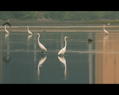 G.L.A.S.S (VinothChandar) Tags: reflection bird heron water glass birds canon photography mirror photo wildlife reflect 5d stillwater mirrorimage chennai tamilnadu alike markii likeness brokenbridge