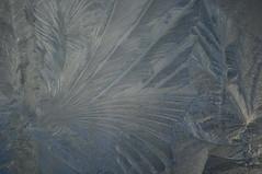 IJsbloemen (=Mirjam=) Tags: morning flowers winter cold ice frozen frost ijsbloemen december bevroren 2010 ijs koud iceflowers frostwork d300s nikond300s