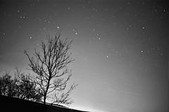 Big Dipper (Justbasicspace) Tags: sky white black tree night stars big dipper constelation Astrometrydotnet:status=solved Astrometrydotnet:version=14400 Astrometrydotnet:id=alpha20110461120137