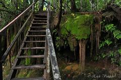 stairway of jungle (Ericks Rodrigues) Tags: lens nikon do natureza bonito selva stairway jungle ms escada 70300mm mata mato sul grosso d700