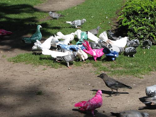 Pigeons at the Efteling