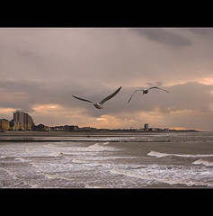 Spread your wings and fly ....... to the sun ........ (*Lie ... on & off ... too busy !) Tags: sunset seagulls lumix belgium panasonic westvlaanderen lie mwe meeuwen nieuwpoort mouettes vlaamsewestkust walkingwithmylittlefriend bigbrothernikonstayedathome